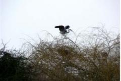 Heron On The Nest - Duncan Gardiner