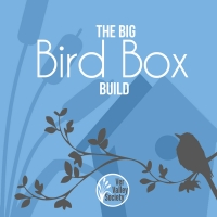 The Big Bird Box Build