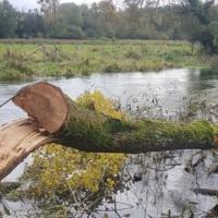 Wood & Water. 30 Nov webinar